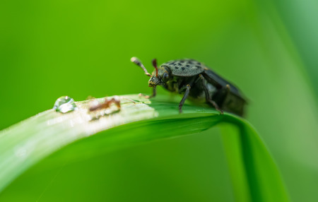 villi: beetle on the stem of a plant