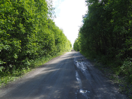 dirt road in the woods photo