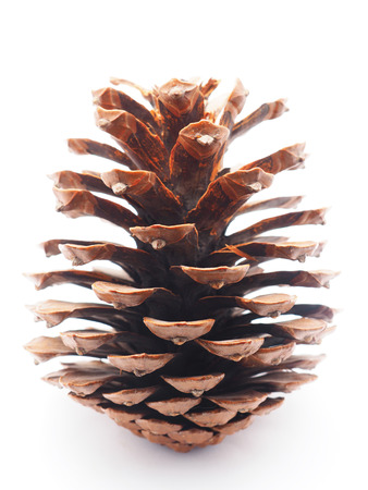 cone on white background photo