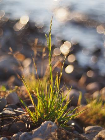 plants on the lake photo