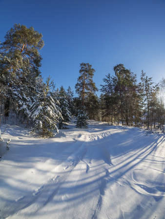 january sunrise: forest in winter Stock Photo
