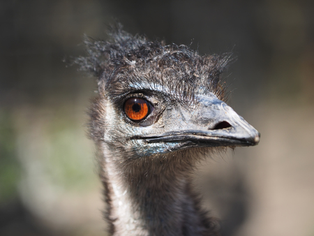 curiousness: portrait of an ostrich Stock Photo