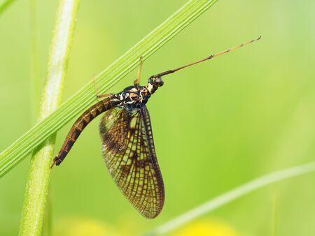 ephemera in the grass