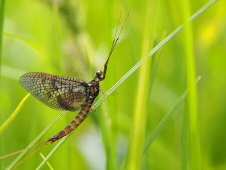 ephemera: ephemera in the grass