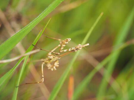 mantis: mantis in the grass