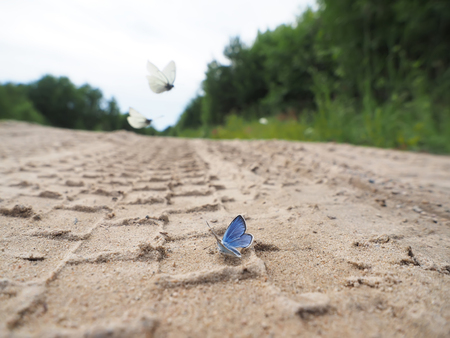 mariposa: Butterfly on the road