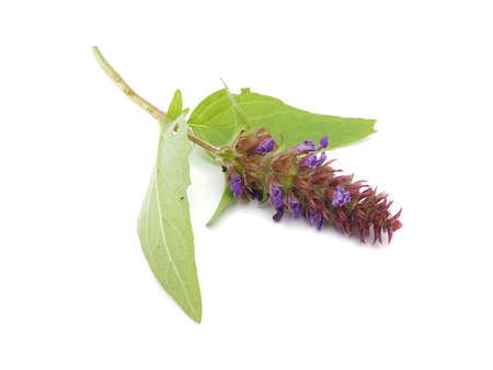 vulgaris: Brunella vulgaris on a white Stock Photo