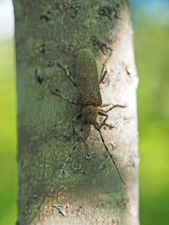 devastating: Beetle on a tree trunk Stock Photo