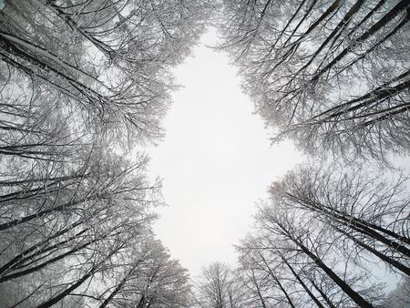 bottom: crown trees. bottom View Stock Photo