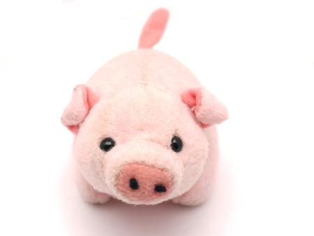 pig: soft toy pig on a white background