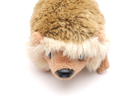 soft toy: soft toy hedgehog on a white background