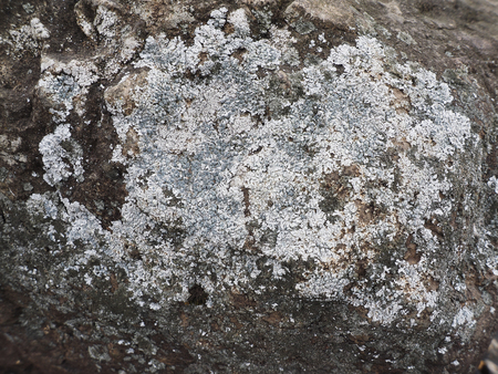 antiviral: lichen on the rocks Stock Photo