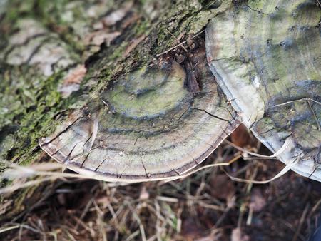 木の上の火口菌
