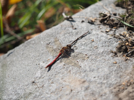 x games: dragonfly on stone Stock Photo