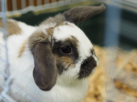 rabbit in cage: decorative rabbit in a cage Stock Photo