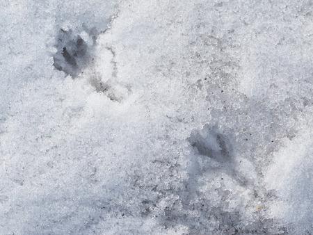vogelspuren: bird tracks in the snow Lizenzfreie Bilder