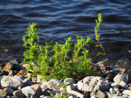 shores: plant on the shores of Lake Stock Photo