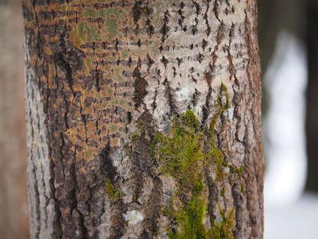 lichen: moss and lichen on a tree trunk