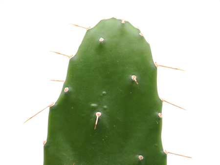 prickly leaves on a white background