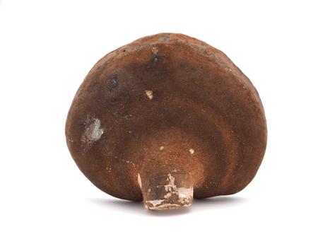 sulphur: Polypore mushroom on a white background