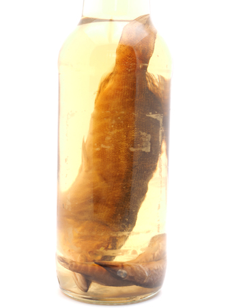 lonesome: fish in a glass jar on a white background