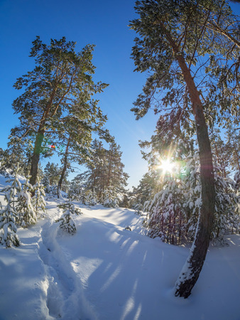 schneeberg: forest in winter Stock Photo