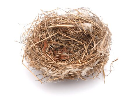 home birth: birds nest on a white background Stock Photo