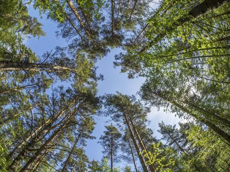 bomen uit de bottom-up