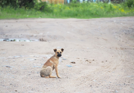implore: puppy on the road in the village