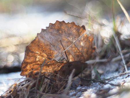 dode bladeren: dode bladeren op de grond