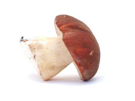 boletus mushroom: boletus mushroom on white background