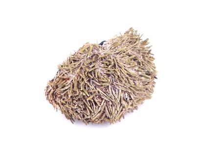 urchin: dry sea urchin on white background