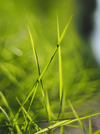 grass in the forest Stock Photo