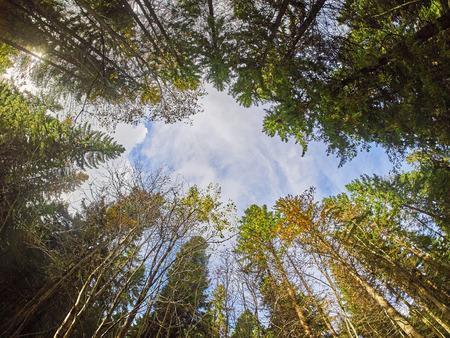 bomen uit de bottom-up in het najaar park Stockfoto