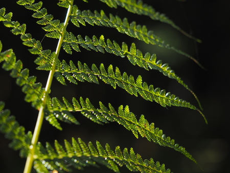 aotearoa: Fern in the forest