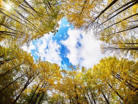 秋の公園では、ボトムアップからの木 写真素材