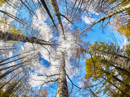 arbres de bas en haut dans le parc d'automne Banque d'images