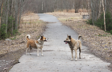 stray: stray dogs on the road