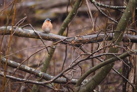 finch: Finch on a tree