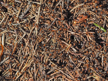 crawly: ants in an anthill Stock Photo