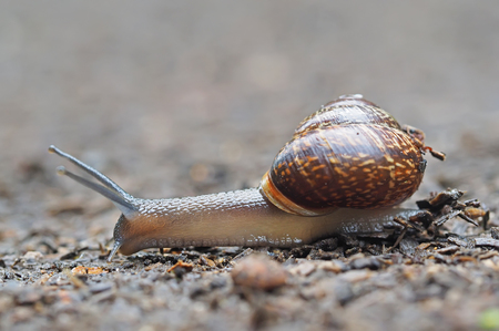 a situation alone: snail on asphalt
