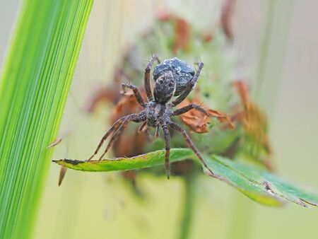 Spider in the woods