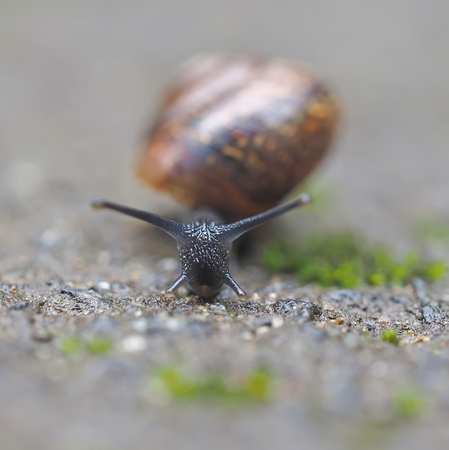 a situation alone: snail on asphalt