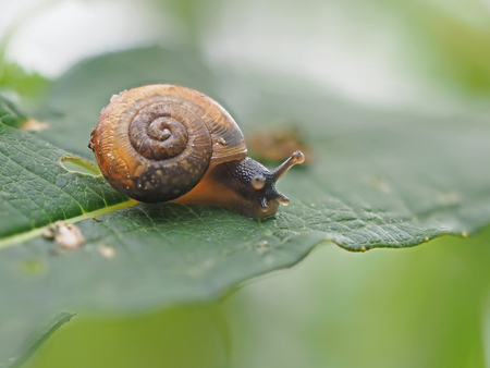 snail on the grass in the forest