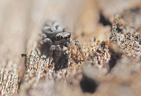 golden orb weaver: Spider in the woods