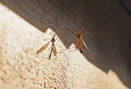 mosquito on the wall