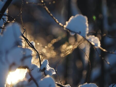 icicle on a branch 免版税图像