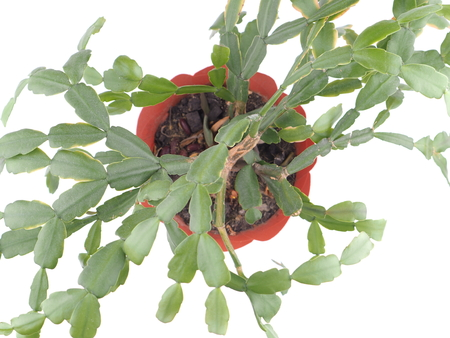 potted plant on a white background Stock Photo