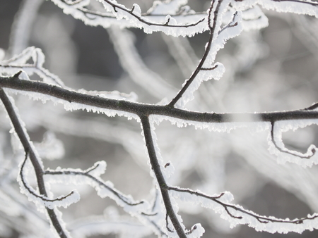 branches in snow Stock Photo