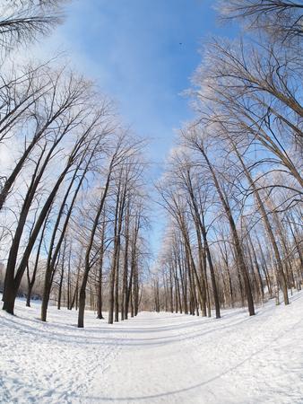 Bäume im Schnee. Park im Winter Standard-Bild - 73812434